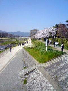 sakura-kamogawa.jpg