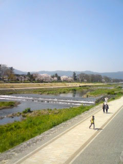 sakura-kamogawa2.jpg