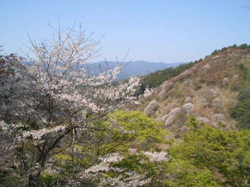 yosino5.jpg